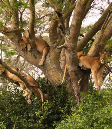 Tarangire Manyara LakeNatron Ngorongoro Serengeti Manyara