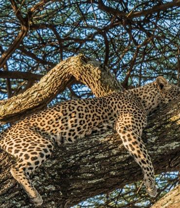 Tarangire Manyara Natron Serengeti Ngorongoro