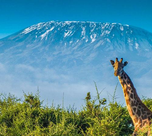 Kilimanjaro Prepairation